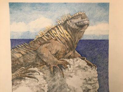 Laura Broaddus Hexner, 'Iguana', 2019