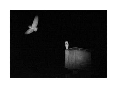 Kristi Lynn Tamcsin, 'Two Owls', 2017