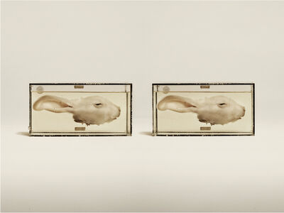 Jim Naughten, 'Common Rabbit', 2014