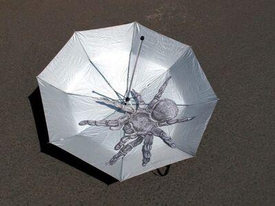Douglas Rodrigo Rada, 'Araña en paraguas', 2015