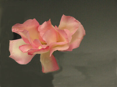 Ann Pachner, 'Blossom', 2016