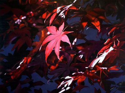 Adriana Molea, 'Japanese Maple Leaf', 2016