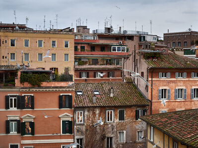 Gail Albert Halaban, 'Birds, Piazza dei Ponziani, Rome, February', 2017