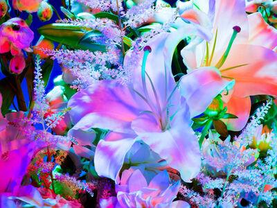 Torkil Gudnason, 'Electric Blossom #1123', 2012