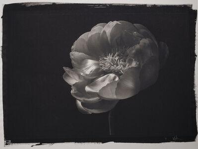 Kenro Izu, 'Still Life #779', 1999