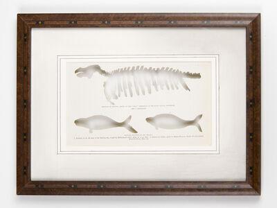 Brandon Ballengée, 'RIP Steller's Sea Cow: After Wilhelm Meyer, 1881', 2015