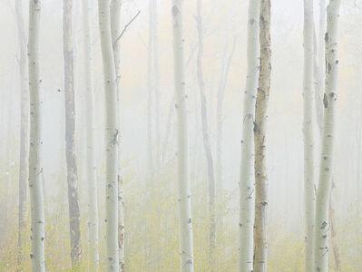 Stephen King 金昌民, 'Autumn Mist', 2017