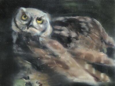 Katherine Bull, 'Owl outside my window', 2020