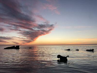 Roy Dagan, 'Schnauzer - color photography, animal photography', 2021