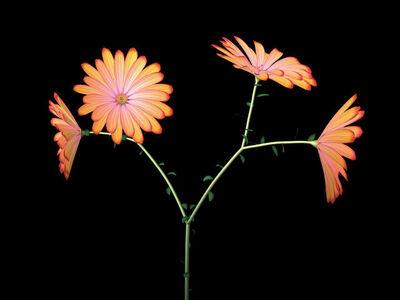 Jennifer Steinkamp, 'Dance Hall Girl 3 (daisies)', 2004