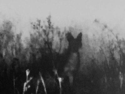 Michal Rovner, 'Night - 24', 2016