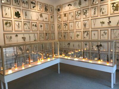 Jernej Forbici, 'HERBARIUM, AURI SACRA FAMES - Installation', 2017