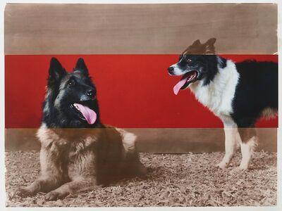 R. J. Kern, 'Supreme Champion Stock Dog Male and Female Pair', 2019