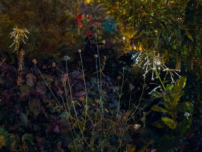 Anna Beeke, 'Midnight in the Garden #150', 2018
