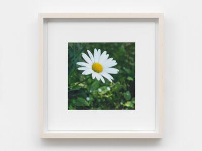 Spencer Finch, 'The daisy follows soft the sun', 2017