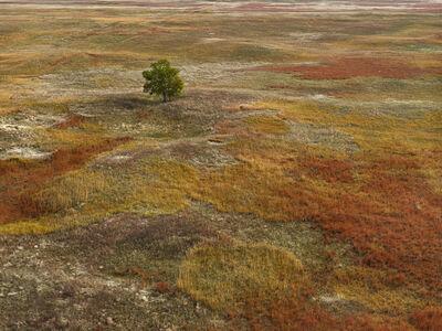 Andrew Moore, 'Autumn Grasses, Sheridan County, Nebraska', 2013