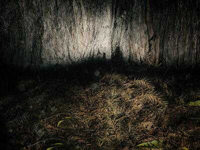 Loredana Celano, 'A Walk in the Wood #2', 2019