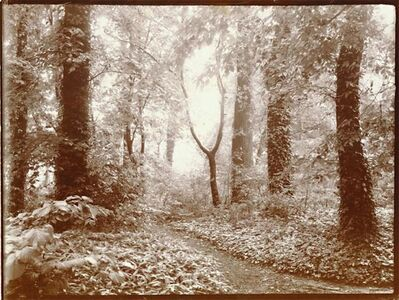 Léonard Misonne, 'A Leafy Path', 1920s