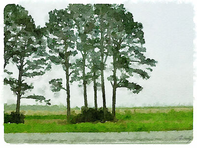 Anne M Bray, 'Pines, Louisiana', 2014