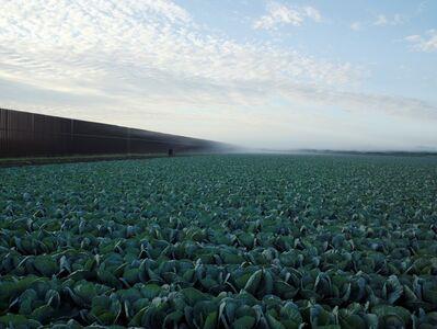 Richard Misrach, 'Cabbage Crop Near Brownsville, Texas', 2015