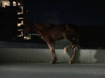 Anri Sala, 'time after time (still) ', 2003