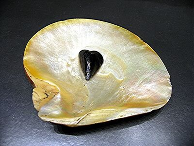 Alberto Magrin, 'The mussel in love of nacre', 2015