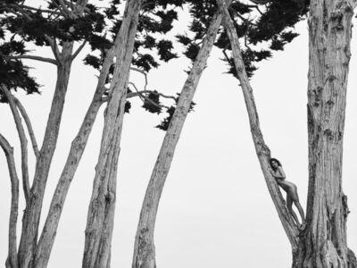 Russell James, 'Kendall in Treetops, Santa Barbara', 2018