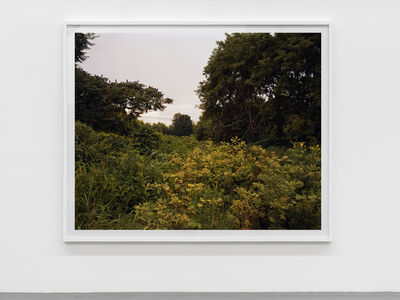 Joel Sternfeld, 'July 17, 2006 The East Meadows, Northampton, Massachusetts', 2006