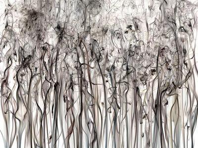 Shai Kremer, 'Perception 17', 2017