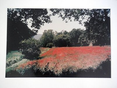 Joel Meyerowitz, 'Tuscany, Field of Poppies, 1996', 20th Century