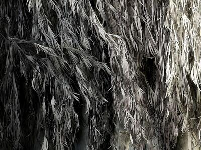 Shirley Wegner, 'Eucalyptus / Test Print (detail)', 2019