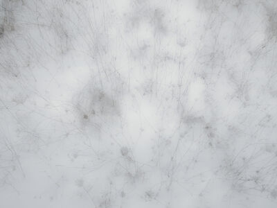 Frank Dituri, 'Grass in Snow, New York', 2013