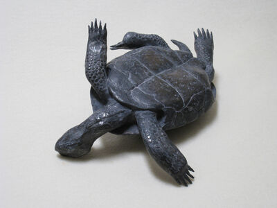 Mark Calderon, 'Untitled (tortoise)', 2010
