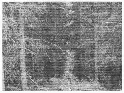 Christiane Baumgartner, 'Wald bei Colditz VI', 2014