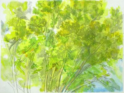 Sylvia Plimack Mangold, 'Pin Oak Crown', 2006