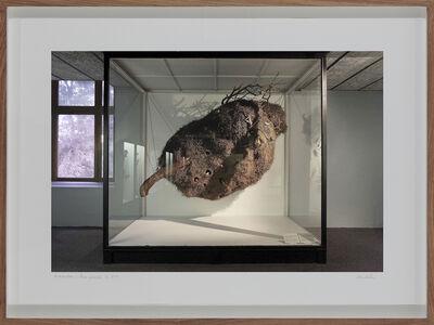 Lien Botha, 'Sociable Weaver's Nest, South African Museum, Cape Town', 2009