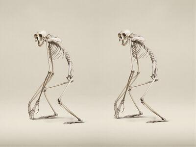 Jim Naughten, 'White-Handed Gibbon', 2015
