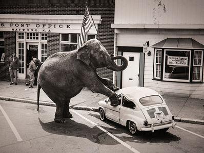 "Melvin Sokolsky, '""New Jersey Elephant""', ca. 1970"