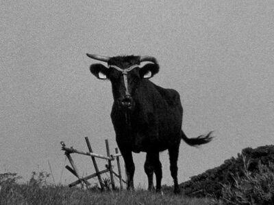 Nobuhiro Shimura, 'Japanese Cattle', 2015