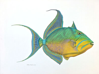 Flick Ford, 'Queen Triggerfish', 2016