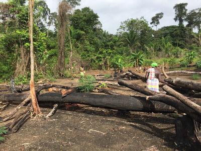 Onajide Shabaka, 'Rice planting Akisiamaw', 2017
