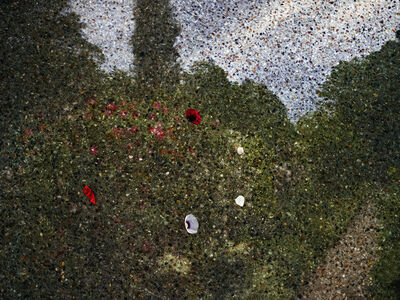 Abelardo Morell, 'Tent-Camera Image on Ground: View of Monet's Gardens with Flowers on the Ground, Giverny, France', 2015