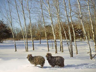 R. J. Kern, 'Annabelle and Friend, Anoka County, Minnesota, USA', 2017