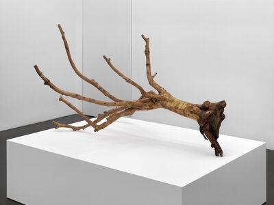 Fabrice Samyn, 'From the olive tree garden #5', 2013