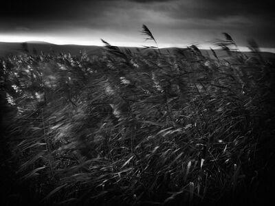 Jon Wyatt, 'Reedbeds, Bridgewater Bay, North Somerset', 2011