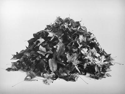 Mary Sweeney, 'Leaf Pile Study ', 2016
