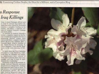 Becca Albee, 'Response Killings, Newspapers & Flowers', 2009