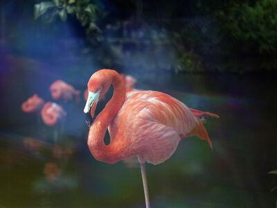 Darren Sylvester, 'Flamingo', 2014