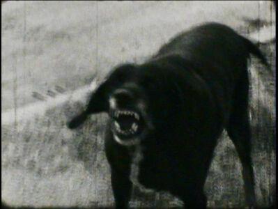 Franco Vaccari, 'I cani lenti', 1971