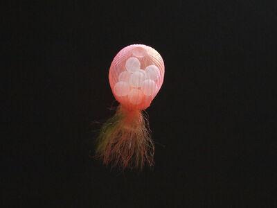 Mariko Kusumoto, 'Jellyfish 6', 2020